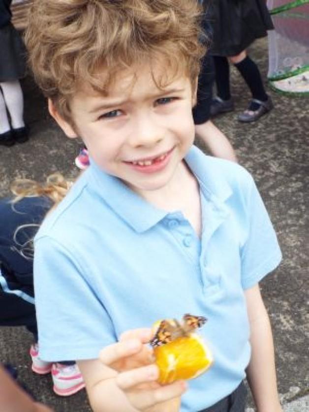 Caterpillars to Butterflies – June 2017