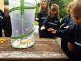 Caterpillars to Butterflies - Junior and Senior Infants June 2017