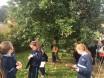 September 2016: Tree Study