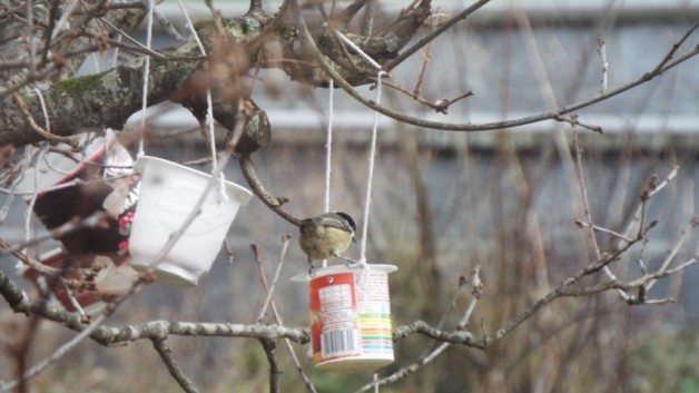 Bird Spotting