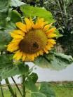 Our Garden September 2021